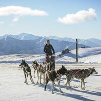 Dog Sledding on the Snow Farm Cross Country Trails in Wanaka
