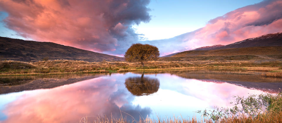 Nevis Tree - Nevis Valley.jpg