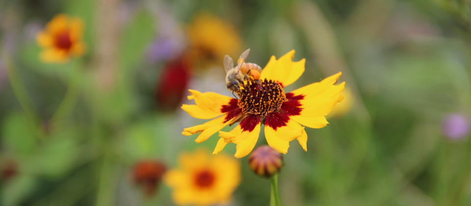 Summer brings an explosion of wildflowers at our amazing deer farm experience