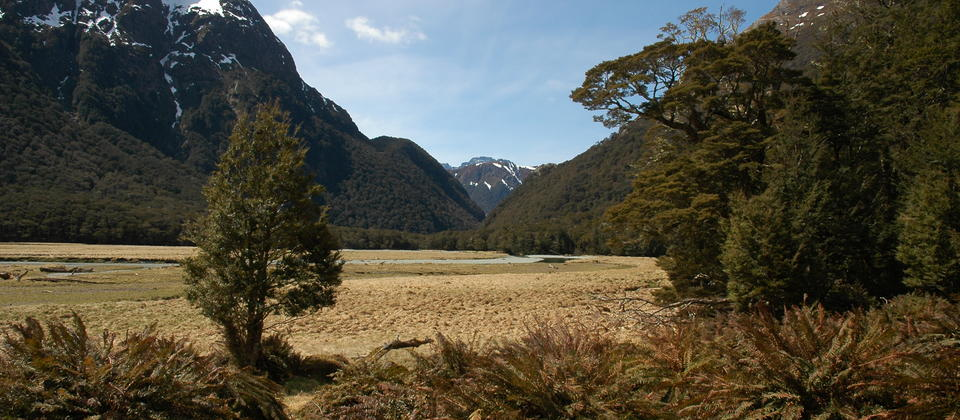Routeburn Flats on the Routeburn Track