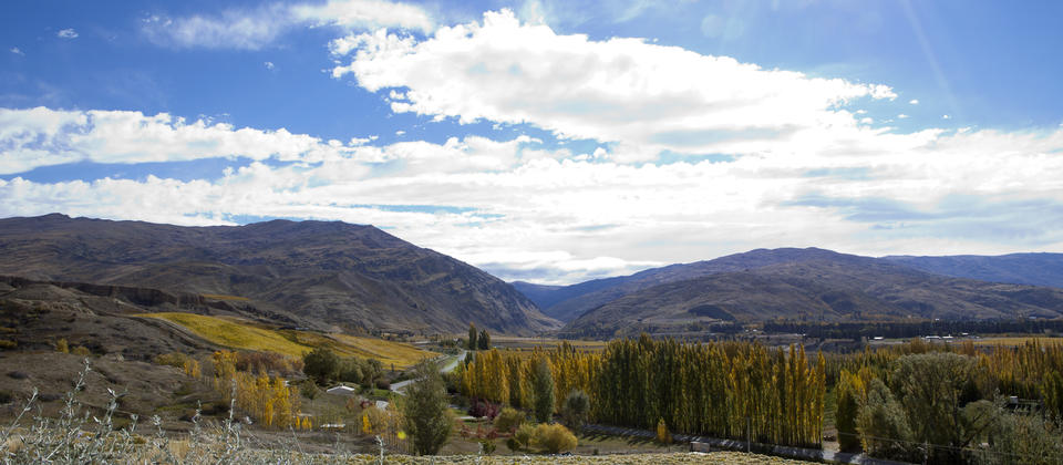Looking up towards the Kawarau Gorge and over the many vineyards in Bannockburn, Central Otago.