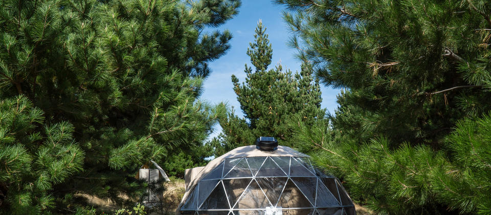Dome at Mt Gold camp