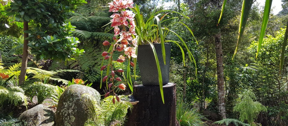 Warblers Retreat - orchid in garden.jpg