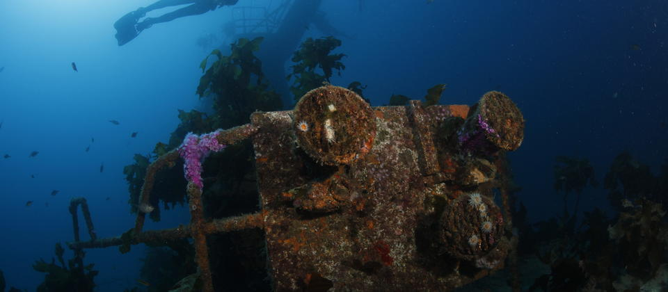 Divers on the HMNZS Canterbury Wreck