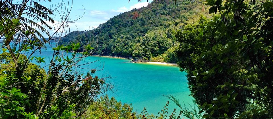 Walk the trail winding around the azure waters of Abel Tasman National Park