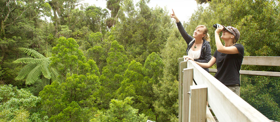 Enjoying the view from the canopy tower at Sanctuary Mountain Maungatautari