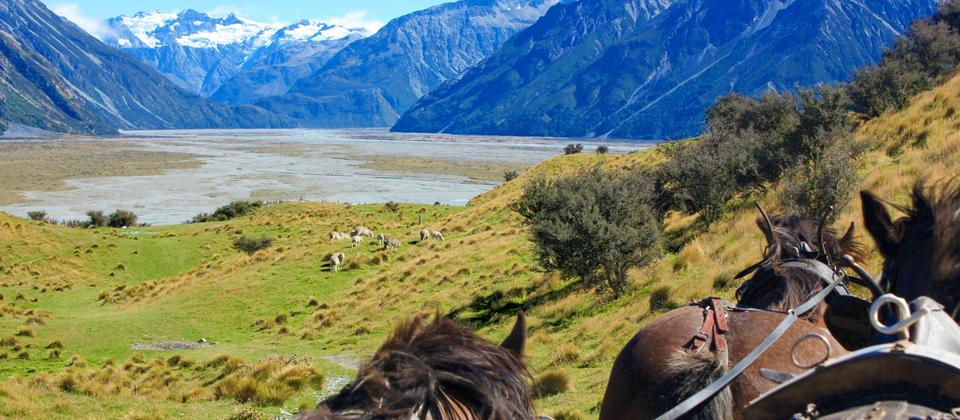 Optional High Country Experience (Wagon Ride): the terrain means treks are only at walking pace. Despite their size the Clydesdales are gentle giants - highly intelligent animals who definitely know how to put a grin on people's faces!