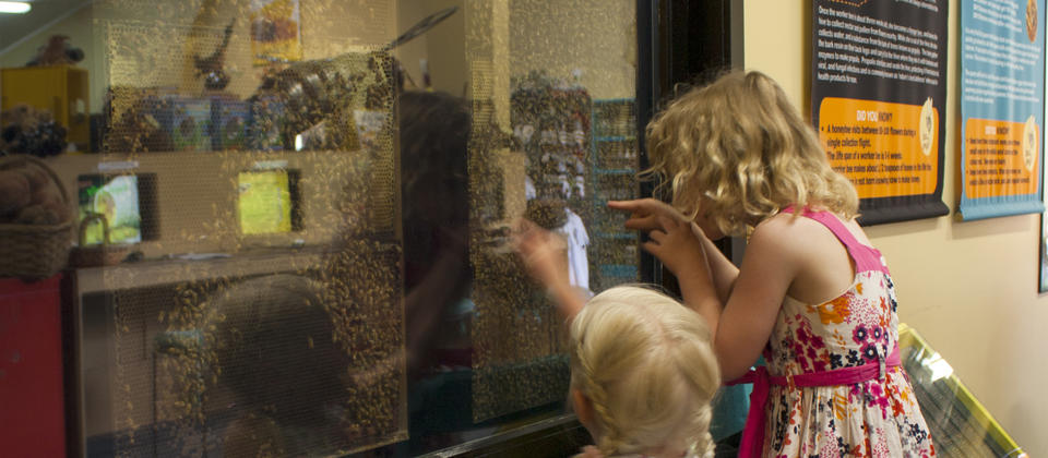 Children enjoy looking at the live bees