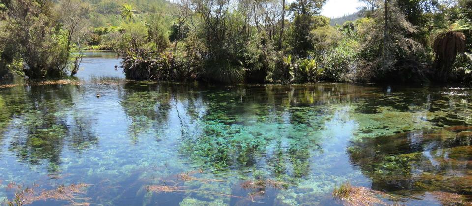 The clearest water in the world, Te Waikoropupu Springs, Golden Bay