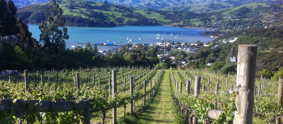 View from Vineyard over Akaroa