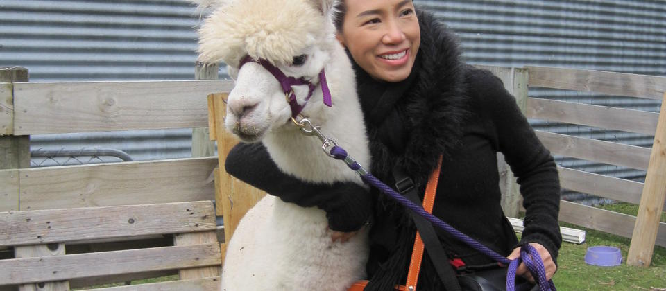 You can give our lovable alpacas a cuddle, too!
