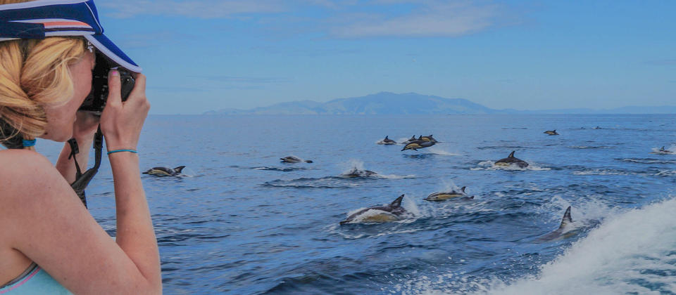 AWADS - Common dolphins.jpg
