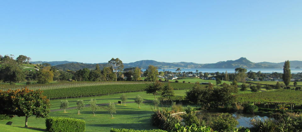 A view across the vineyard to Cooks Beach & Mercury Bay