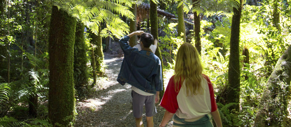 A walk among the silver ferns.