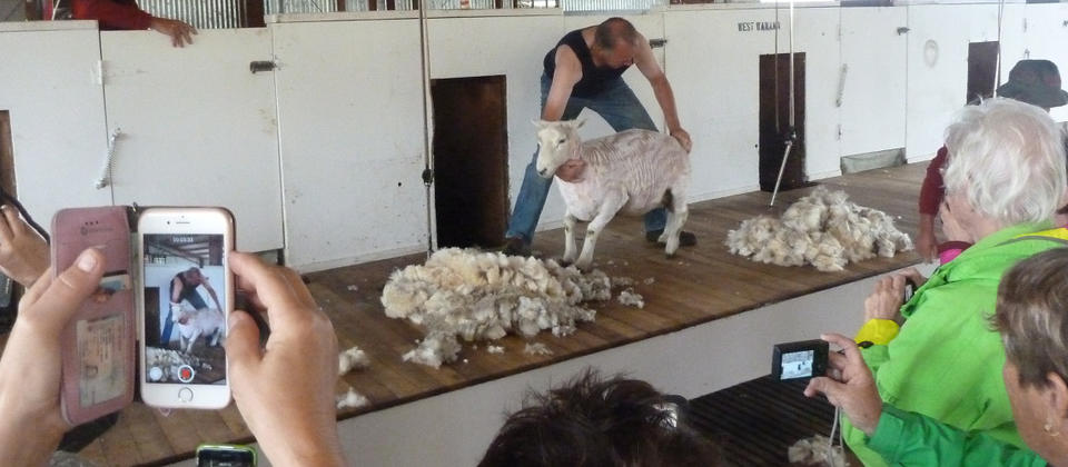 Exclusive Farm Visit and Sheep Shearing Demo