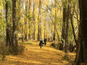 Clutha Gold Trail - Autumn
