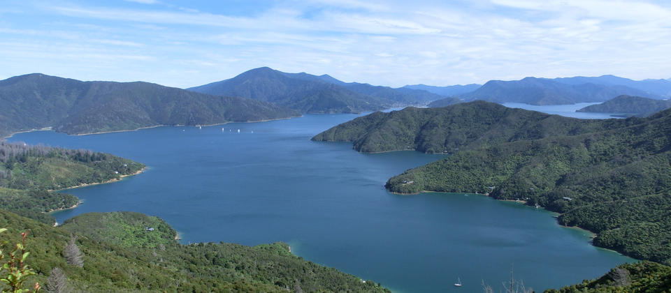 Blackwood Bay - Blick vom Queen Charlotte Track