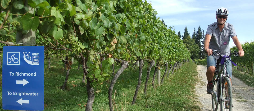 Cycling through a vineyard on the Great Taste Cycle Trail