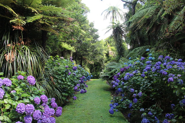 Pukeiti Rainforest Gardens Taranaki New Zealand