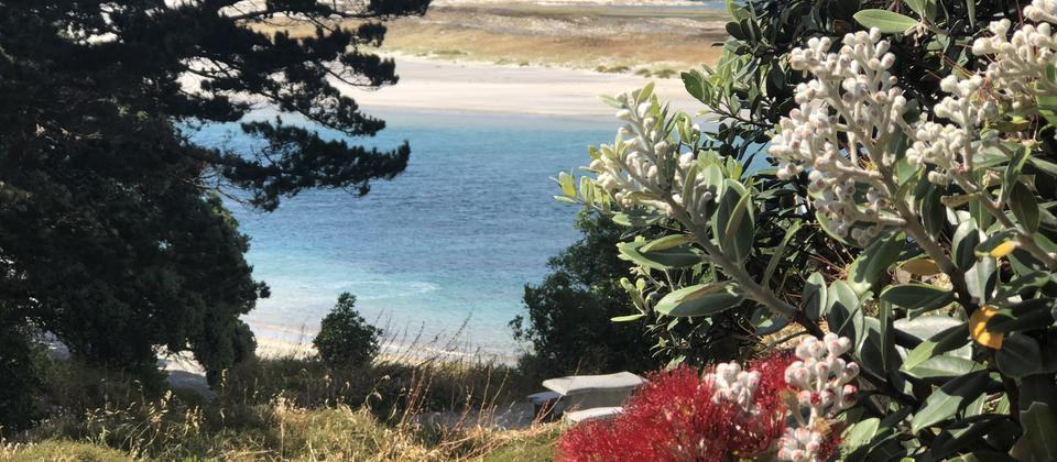 White Sand Beaches, Blue Water & Red Pohutakawas