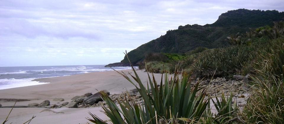 beach on the heaphy track
