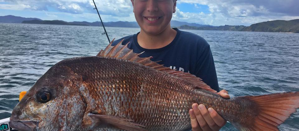 Bay of Islands Snapper