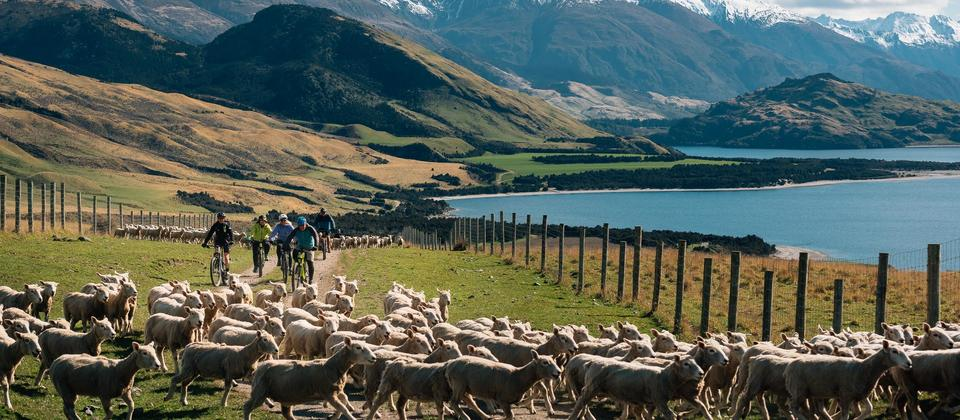 With a variety of packages Southern Lakes Heibike caters to all ability levels and interests.