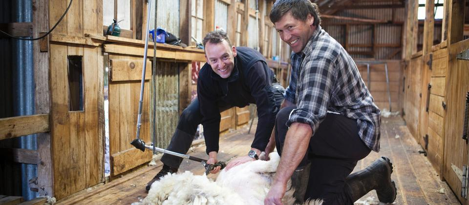 Edward from the Netherlands Shearing his first sheep