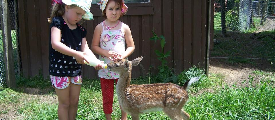 Two little girls bottle feeding mouse mouse our hand raised fallow deer.