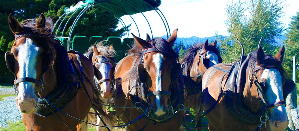 Be transported back in time by the nostalgic wagon ride (additional option), pulled by a team of Clydesdale horses into the spectacular New Zealand back-country highlands