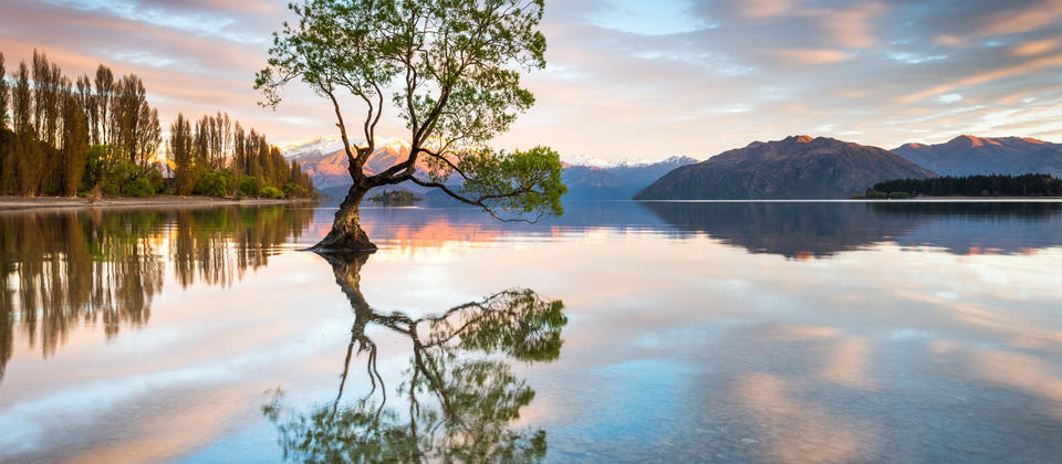 Wanaka Tree Photography Workshop.jpg