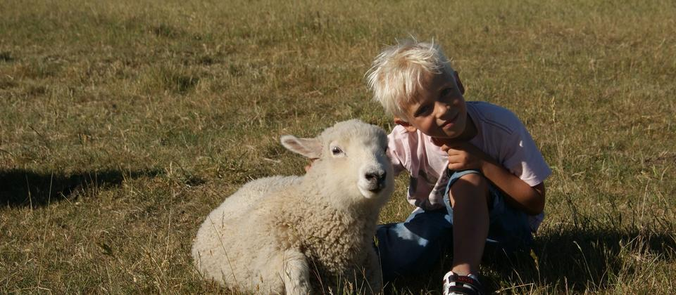 Children enjoy interacting with the farm animcals