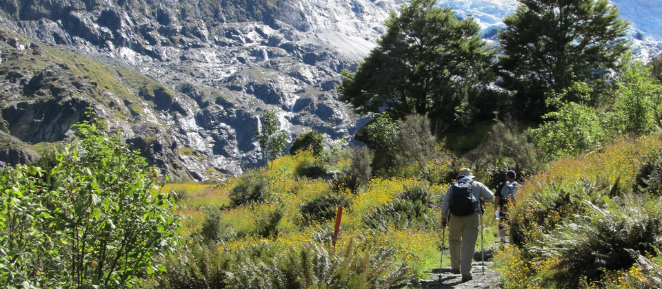 The Rob Roy Glacier track is one of the most varied in NZ. From farmland, to swing bridges, rainforest to alpine herb fields with panoramic glacier views.