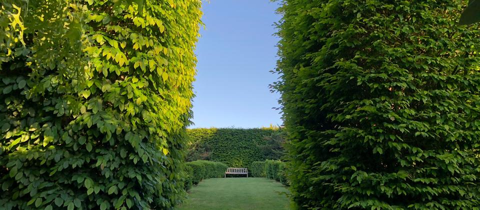 One of the many Quiet spaces at Mincher, Hornbeam hedge with lawn.