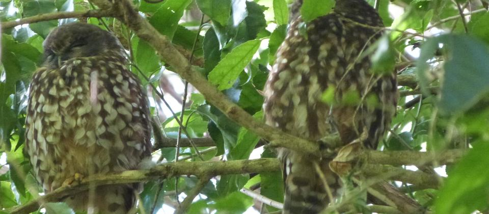 Morepork Riverside Lodge