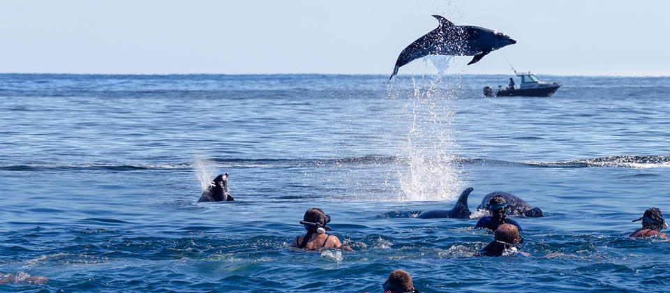 Dolphin Swimming c FullersGreatSights.jpg