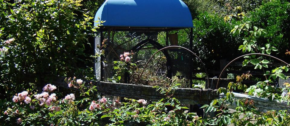 The bird aviary at Kahikatea Gardens enjoys a sunny spot next to climbing roses.