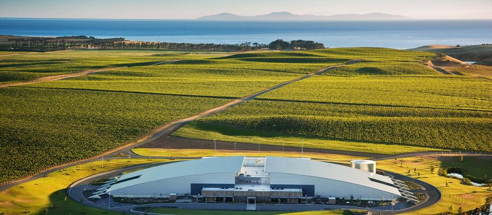 Yealands Winery - within the vines