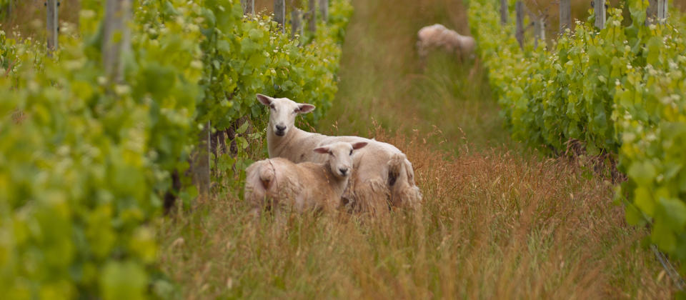 Wineries of West Auckland - Olie's Travels
