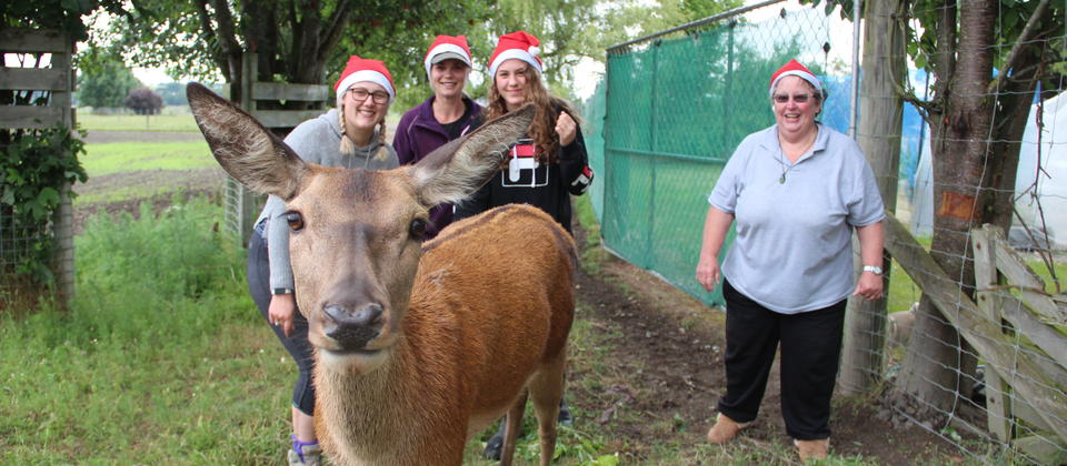 Our pet deer Pixie is always a hit with visitors - especially if you have a banana!