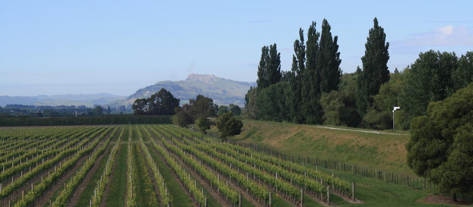 Elevated cycleway overlooking vineyards, farmland with Te Mata Peak in the distance.