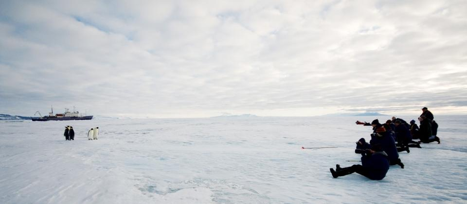Expeditioners photographing Emperor Penguin - Ross Sea of Antarctica