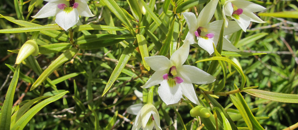 ORCHID-IMG_6516.jpg
