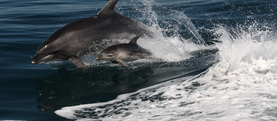 See dolphins during cruise