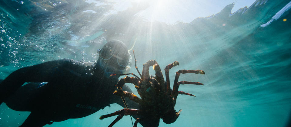 Learn how to free dive to experience Fiordlands amazing underwater world.