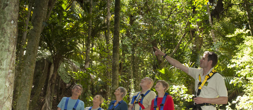 Enjoy a guided wander through centuries old native forest