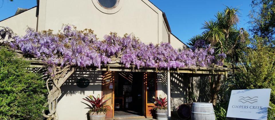 Open for sales, wisteria smelling free!
