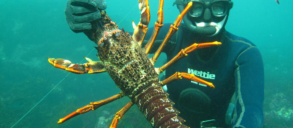Salt+Earth: Free Dive for Crayfish