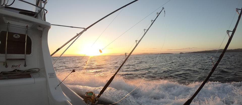 Fishing Charters Bay of Islands Big Game.jpg