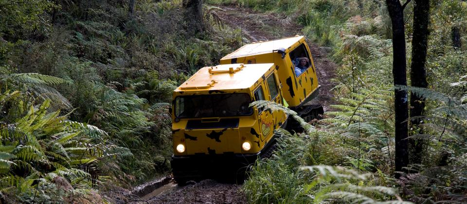 Stay warm and dry inside while the Hagglund takes you in the heart of the rainforest.